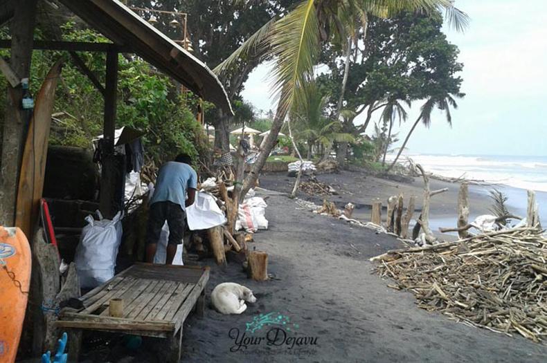 Balian Beach Treibholz