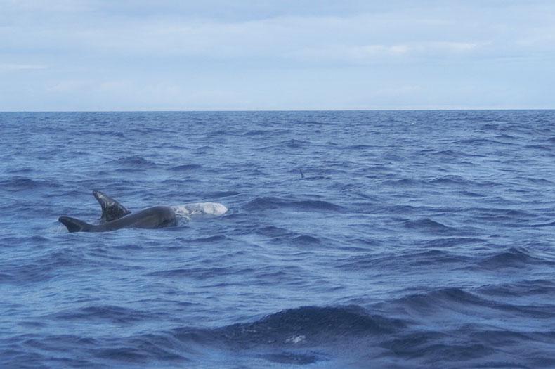 delfine-offene-see