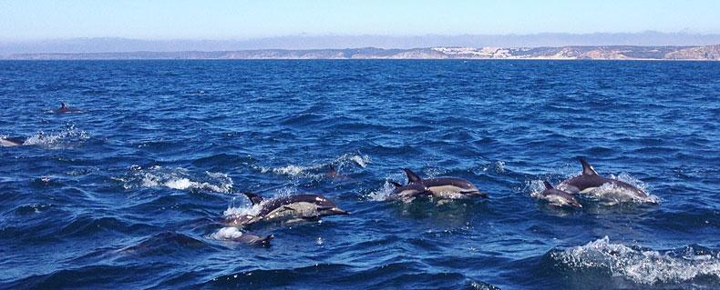 delfinschule