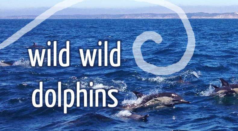 Bericht: mit wilden Delfinen schwimmen