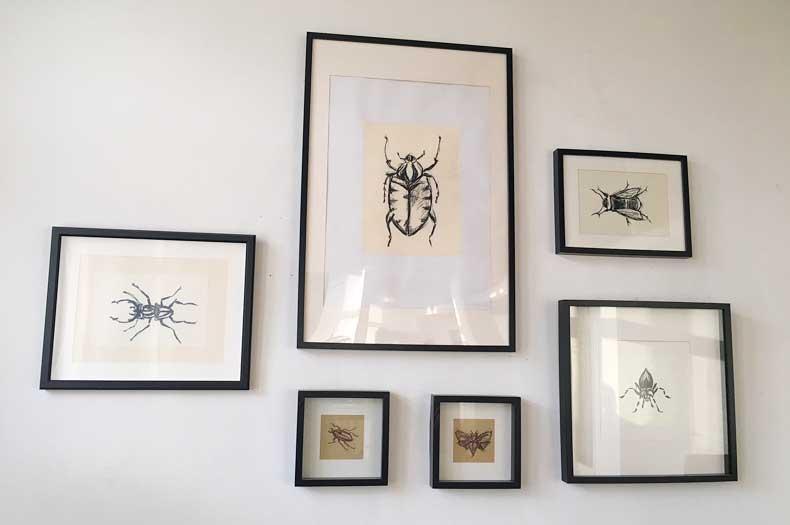 Skizzen von Insekten