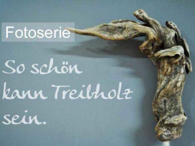 Bilder von Treibholz
