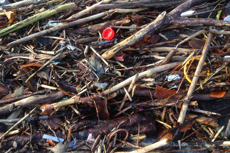 Treibgut mit Schwemmholz und Plastik
