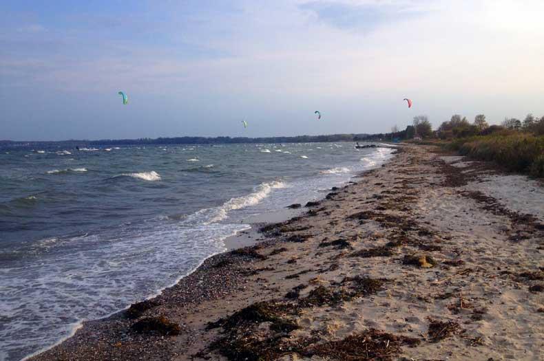 Ostseestrand wo man Treibholz finden kann
